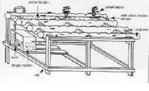 hidroponik1