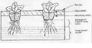 hidroponik2